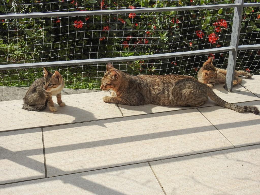 cat4_senagajimahotel