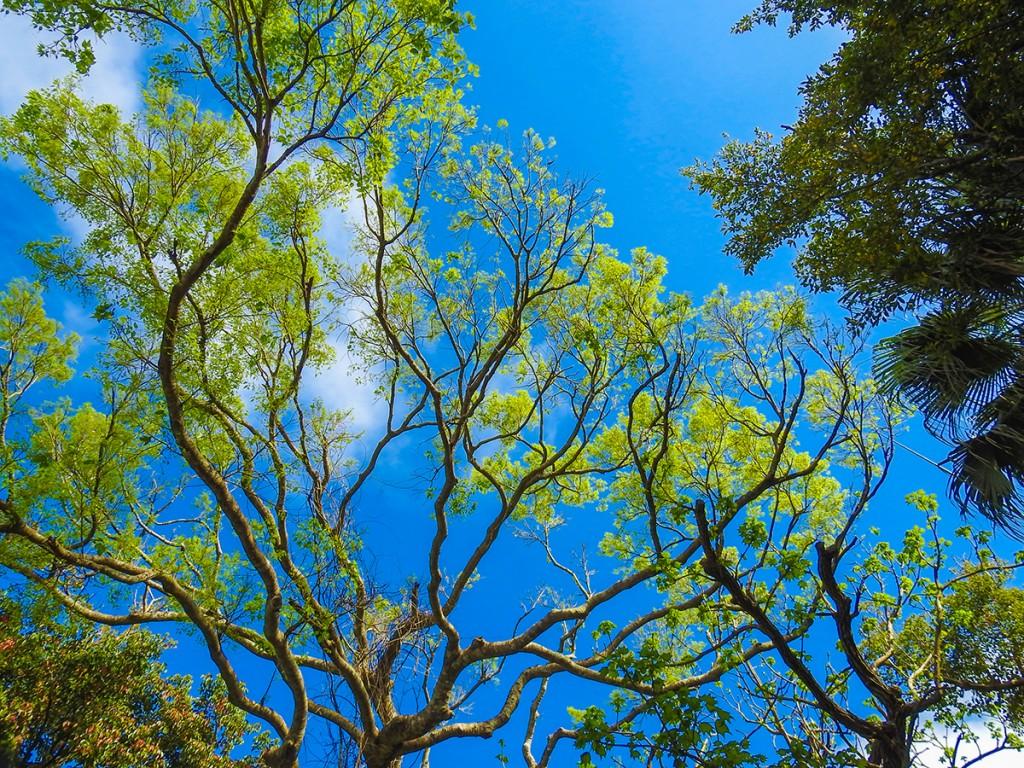 sky_tree_kannonji