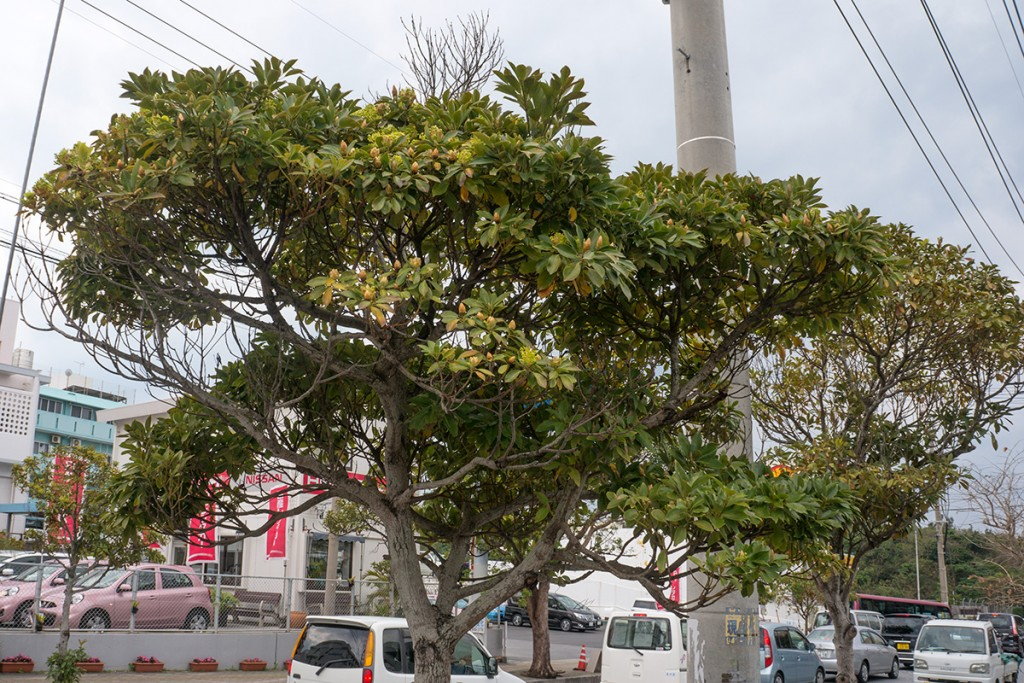 tree_fl6_center160216