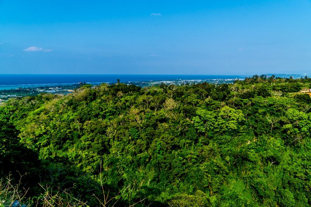 forest2_nakijinjoshi160315