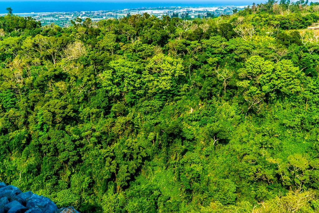forest_nakijinjoshi160315