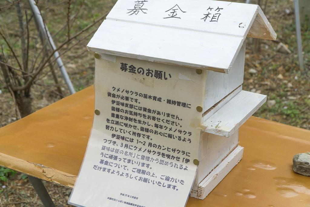 kumenosakura124bokin_izumi160314