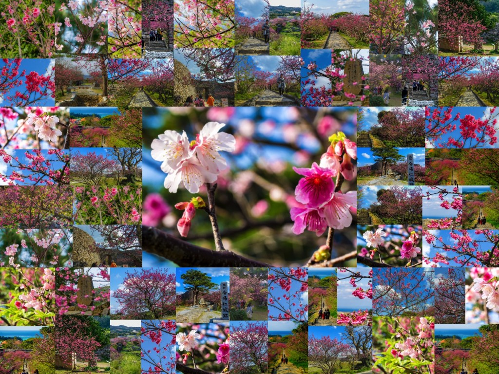 sakura_nakijin_collage_160217