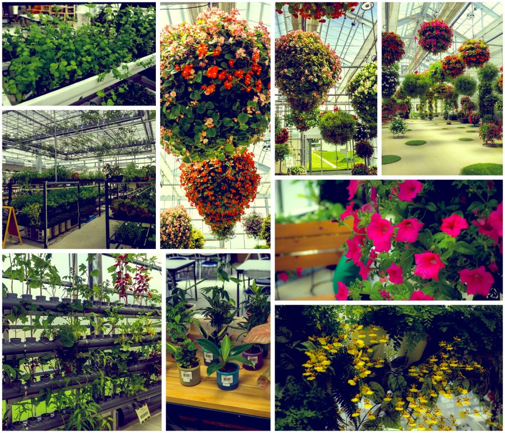 collage_superfarm_agripark