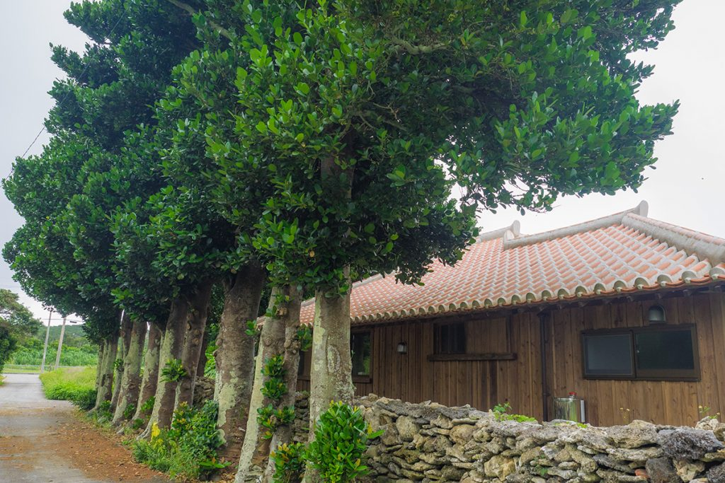 tree_house_izena_izena