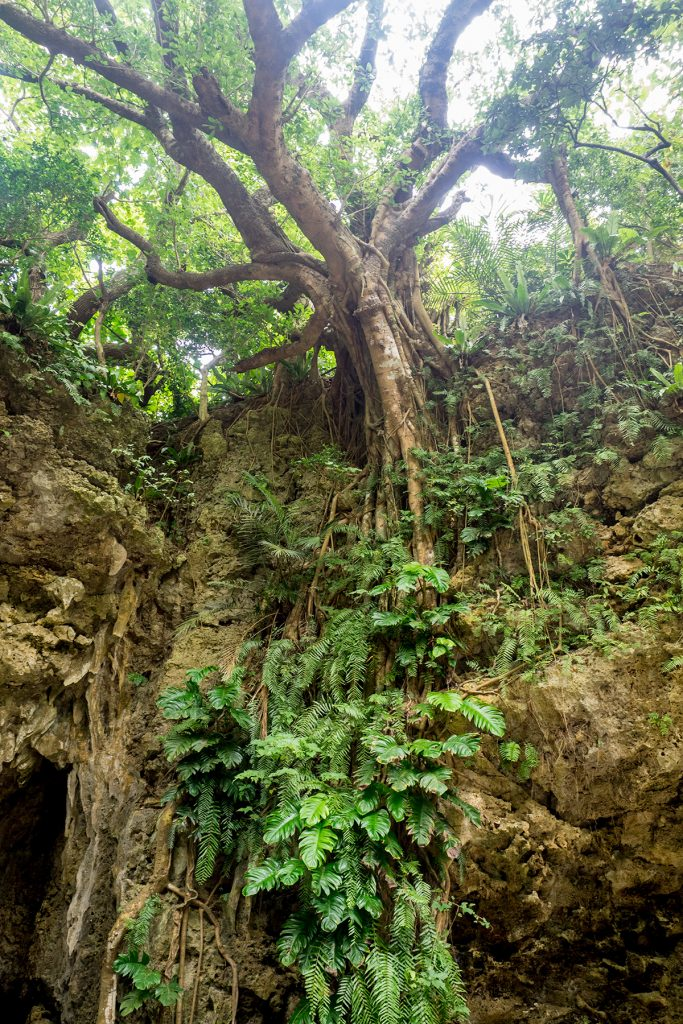 sabichi_cave_exit_gajumaru