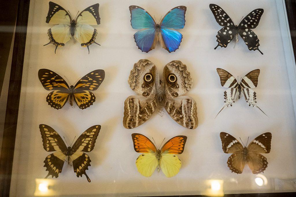 butterfly_kabirafarm