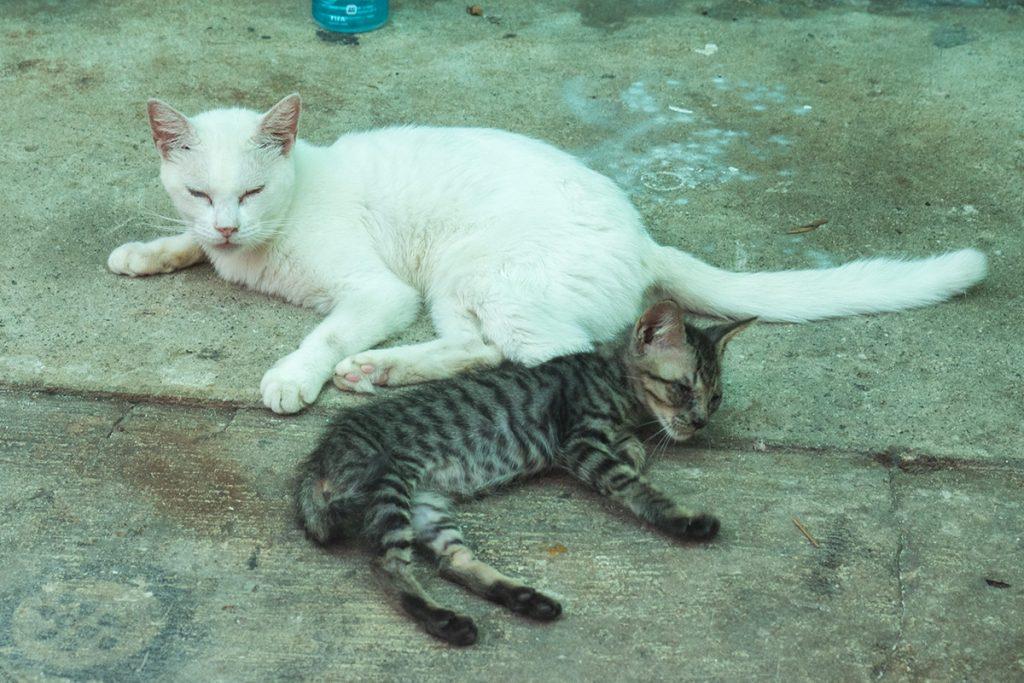 cats_kabira160819