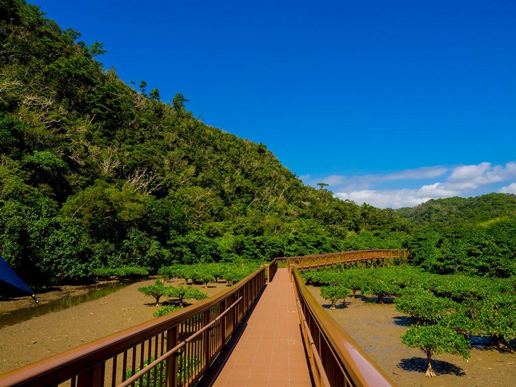mangroveroad03_ohura