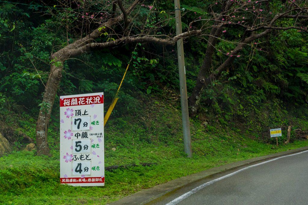 sakura03_7-5-4_yaedake170128