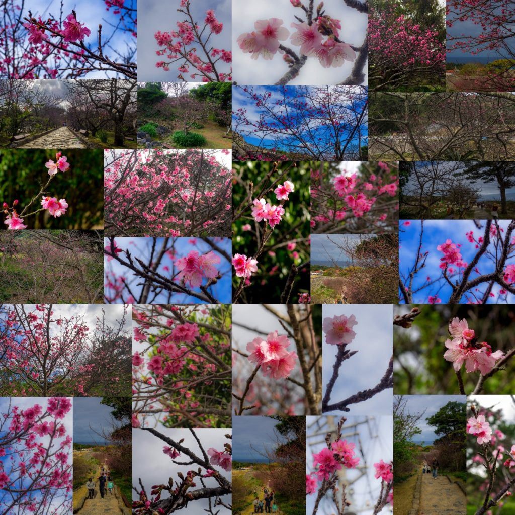 sakura_collage_nakijincastle170129