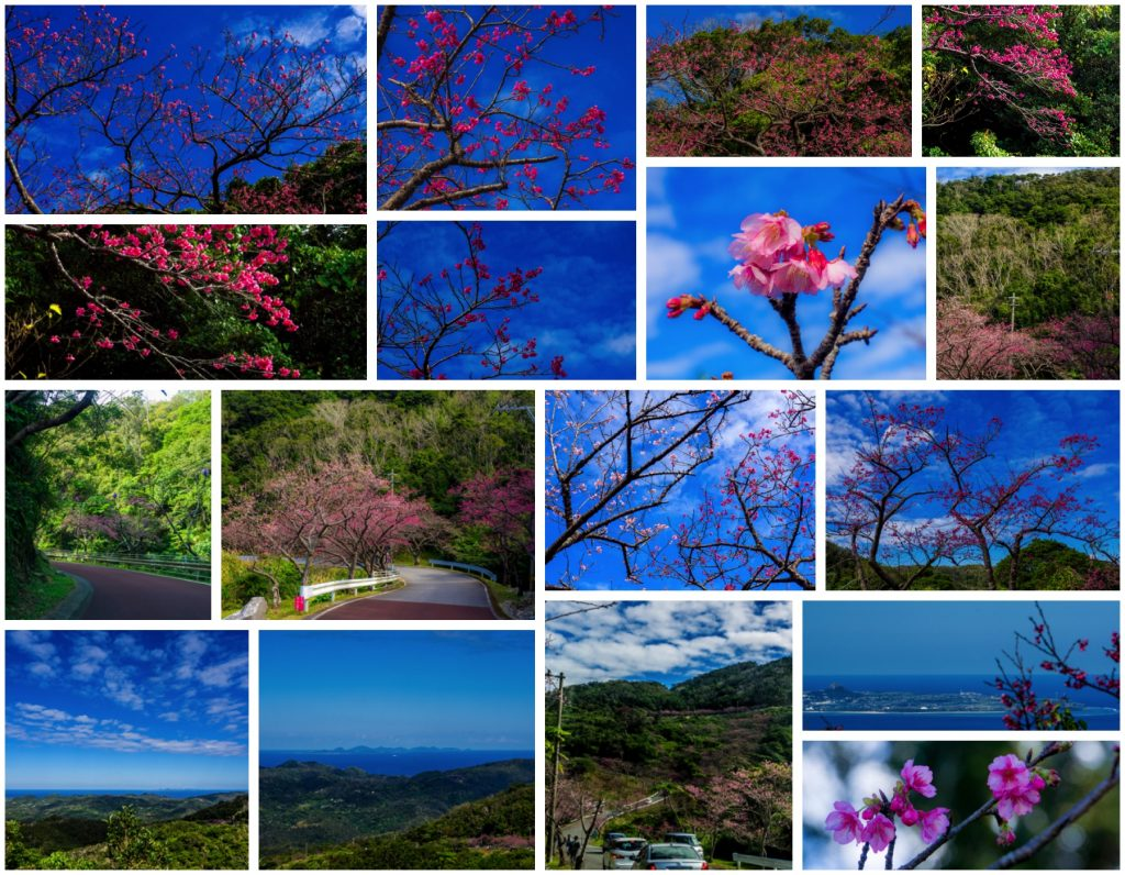 sakura_collage_yaedake170128